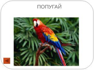 16 Эта птица является символом мира, бывают дикие и домашние. ОТВЕТ