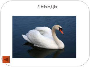 53 Бывает скрипичный, замочный, водный, гаечный… ОТВЕТ