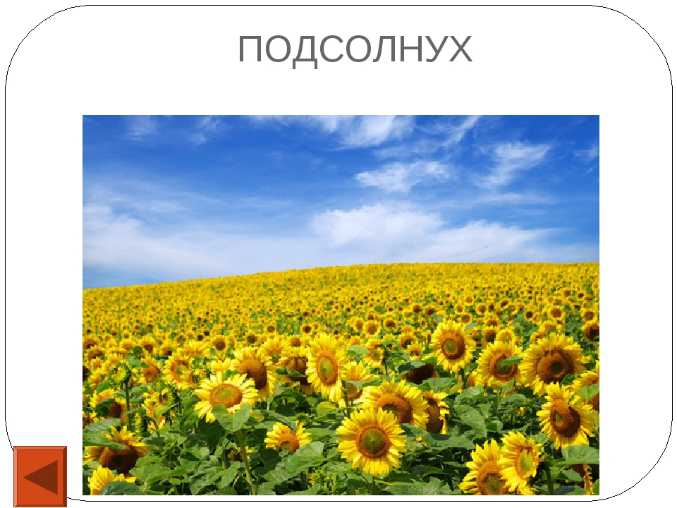 15 Каким фруктом отравили царевну в сказке Пушкина «О мертвой царевне и семи...
