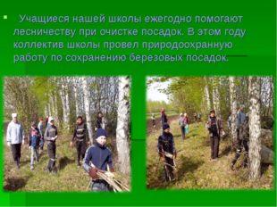 Учащиеся нашей школы ежегодно помогают лесничеству при очистке посадок. В эт