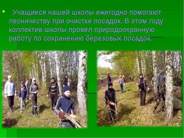 Учащиеся нашей школы ежегодно помогают лесничеству при очистке посадок. В эт...