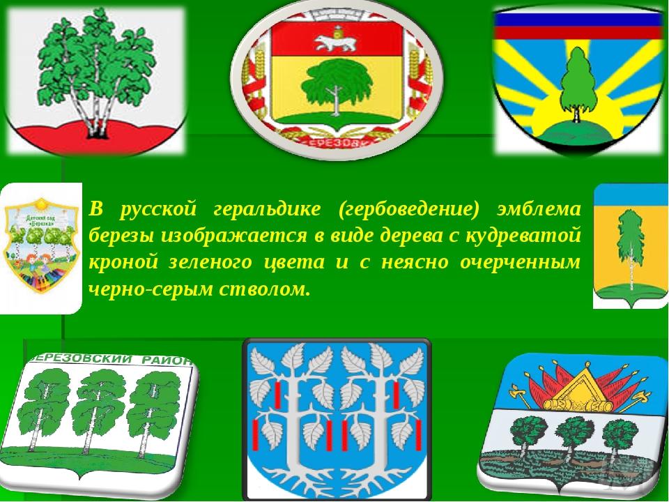 В русской геральдике (гербоведение) эмблема березы изображается в виде дерев...