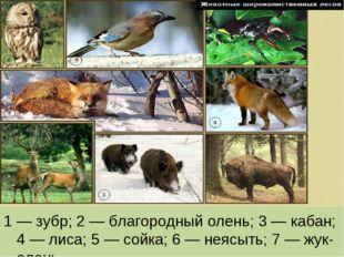 1 — зубр; 2 — благородный олень; 3 — кабан; 4 — лиса; 5 — сойка; 6 — неясыть;