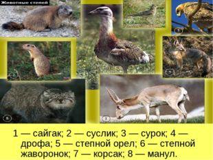 1 — сайгак; 2 — суслик; 3 — сурок; 4 — дрофа; 5 — степной орел; 6 — степной ж