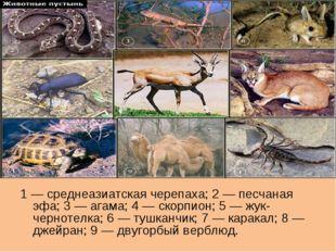 1 — среднеазиатская черепаха; 2 — песчаная эфа; 3 — агама; 4 — скорпион; 5 —