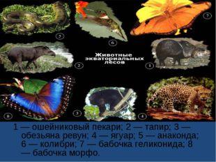 1 — ошейниковый пекари; 2 — тапир; 3 — обезьяна ревун; 4 — ягуар; 5 — анаконд