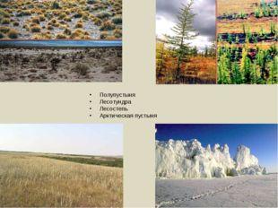 Полупустыня Лесотундра Лесостепь Арктическая пустыня