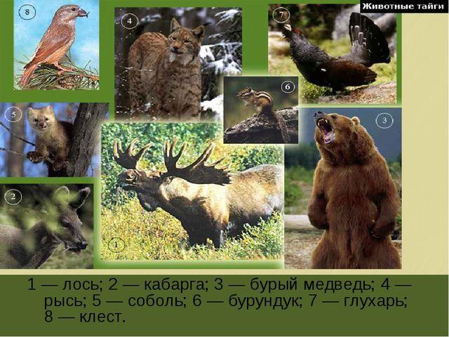 1 — лось; 2 — кабарга; 3 — бурый медведь; 4 — рысь; 5 — соболь; 6 — бурундук;...