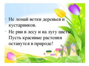 Не ломай ветки деревьев и кустарников. Не рви в лесу и на лугу цветы. Пусть