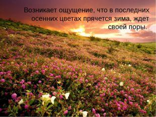 Возникает ощущение, что в последних осенних цветах прячется зима, ждет своей