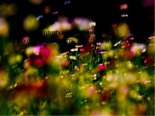 В осенних цветках соединились хрупкость, нежность, красота и вечность