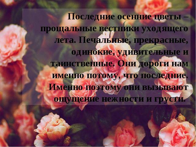 Последние осенние цветы – прощальные вестники уходящего лета. Печальные, прек...