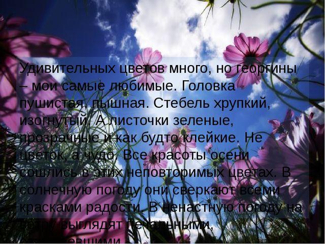 Удивительных цветов много, но георгины – мои самые любимые. Головка пушистая,...
