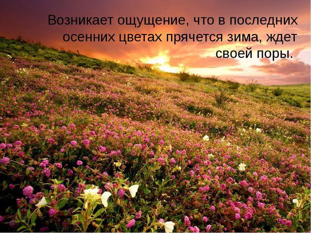 Возникает ощущение, что в последних осенних цветах прячется зима, ждет своей...
