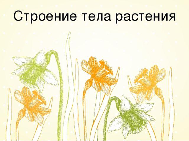 Строение тела растения
