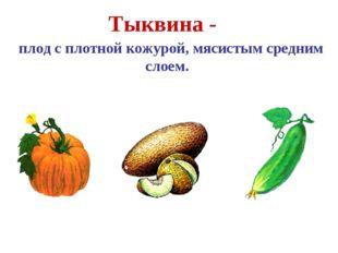 Тыквина - плод с плотной кожурой, мясистым средним слоем. Тыква Дыня Огурец