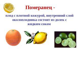 Померанец - плод с плотной кожурой, внутренний слой околоплодника состоит из