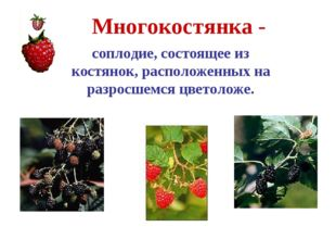Многокостянка - соплодие, состоящее из костянок, расположенных на разросшемся