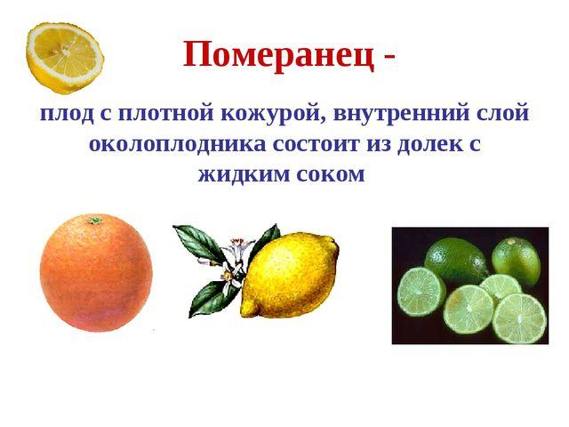 Померанец - плод с плотной кожурой, внутренний слой околоплодника состоит из...