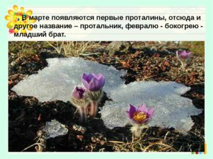 В марте появляются первые проталины, отсюда и другое название – протальник,