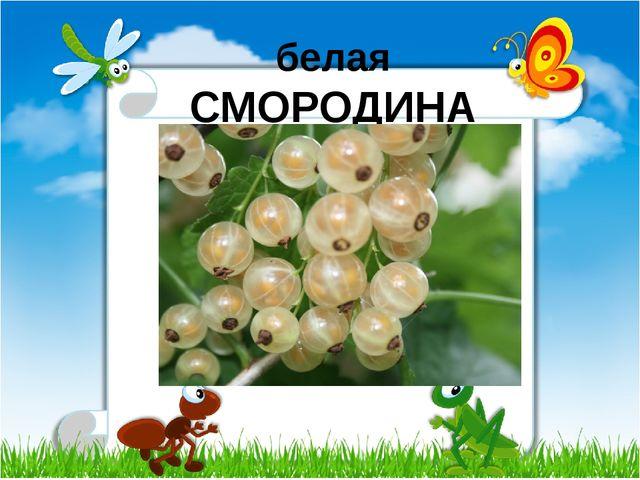 белая СМОРОДИНА