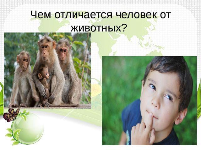 Чем отличается человек от животных?