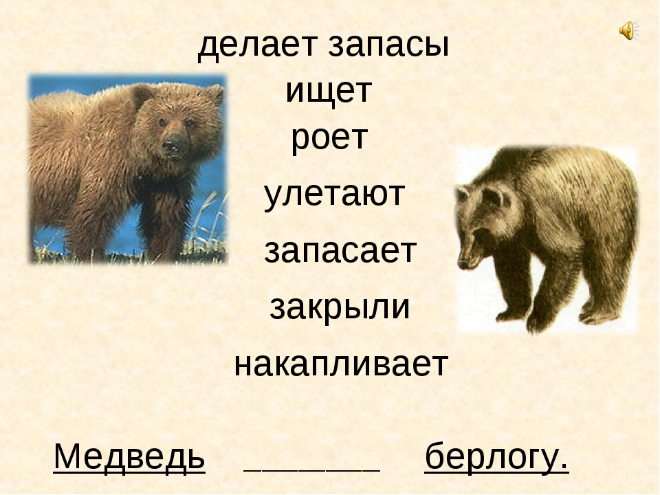 Медведь ищет берлогу. _______________ роет улетают запасает закрыли делает за...