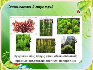 Соотношения в мире трав