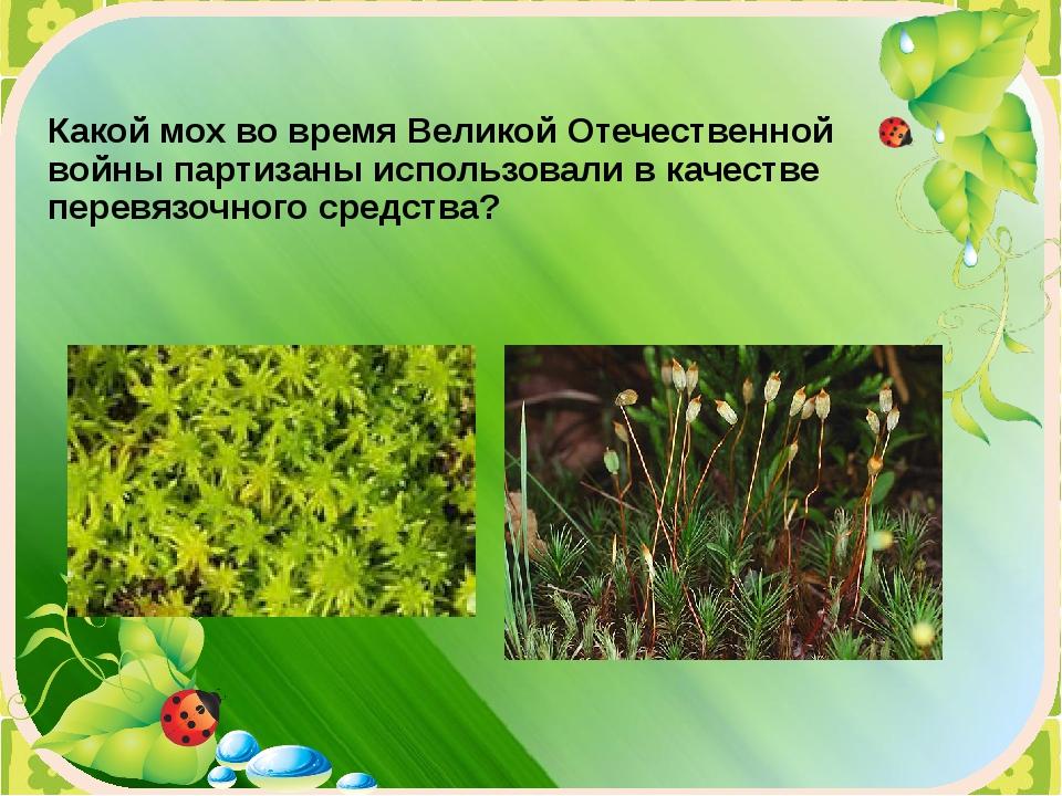 Какой мох во время Великой Отечественной войны партизаны использовали в качес...