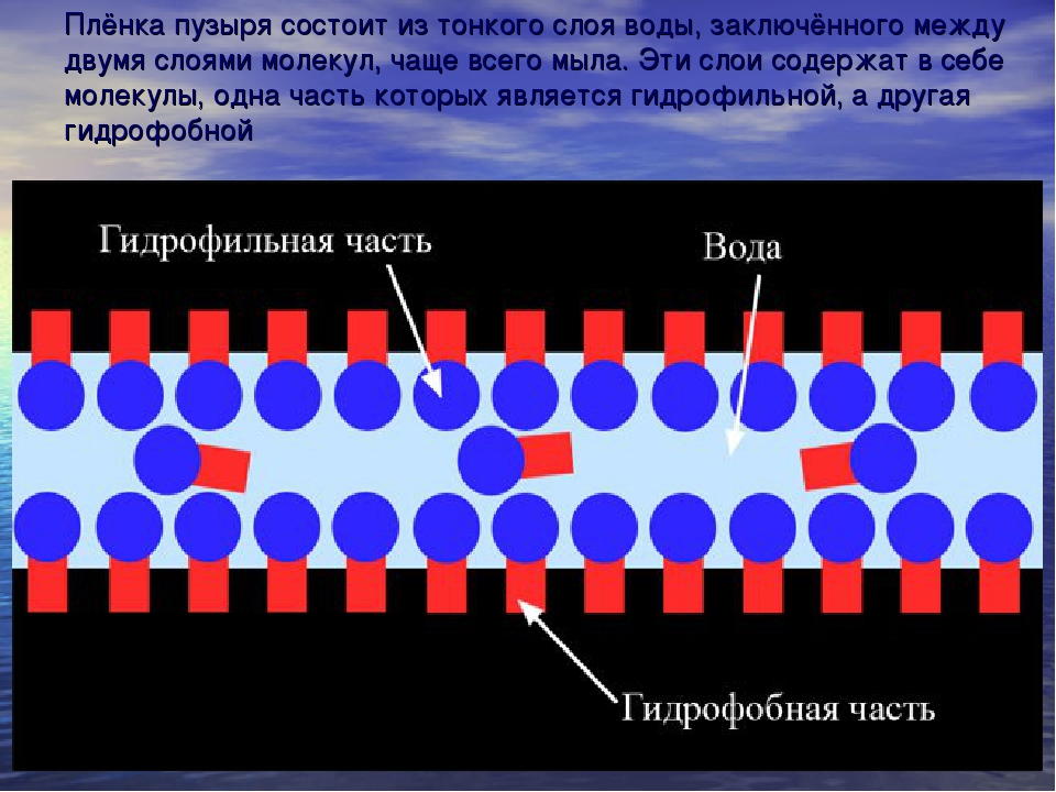 Плёнка пузыря состоит из тонкого слоя воды, заключённого между двумя слоями м...