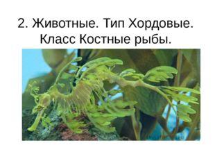 2. Животные. Тип Хордовые. Класс Костные рыбы. Морской дракон