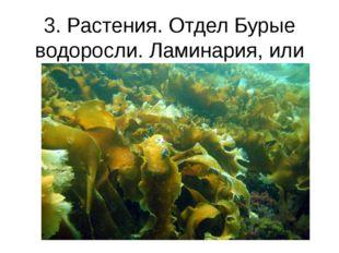 3. Растения. Отдел Бурые водоросли. Ламинария, или Морская капуста