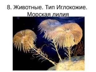 8. Животные. Тип Иглокожие. Морская лилия