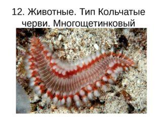 12. Животные. Тип Кольчатые черви. Многощетинковый червь