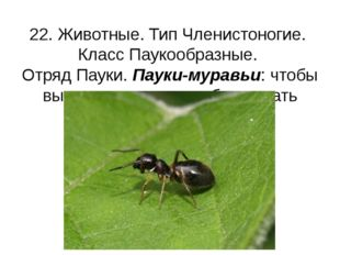 22. Животные. Тип Членистоногие. Класс Паукообразные. Отряд Пауки. Пауки-мура