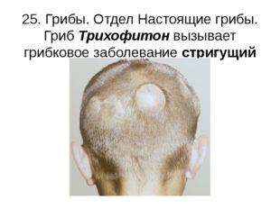 25. Грибы. Отдел Настоящие грибы. Гриб Трихофитон вызывает грибковое заболева