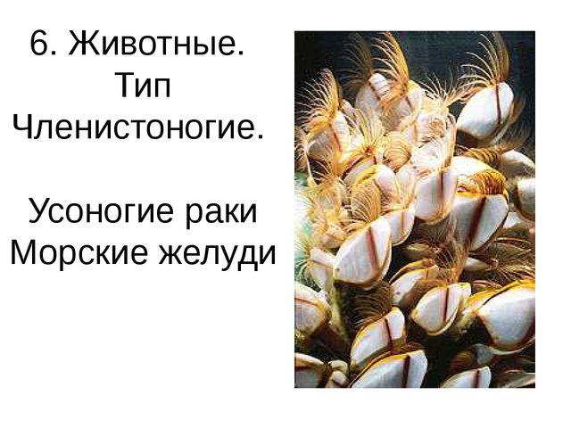 6. Животные. Тип Членистоногие. Усоногие раки Морские желуди