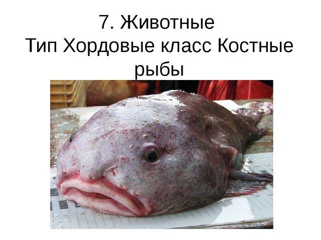 7. Животные Тип Хордовые класс Костные рыбы Рыба-капля