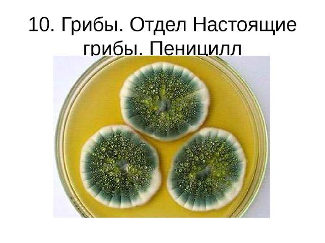 10. Грибы. Отдел Настоящие грибы. Пеницилл