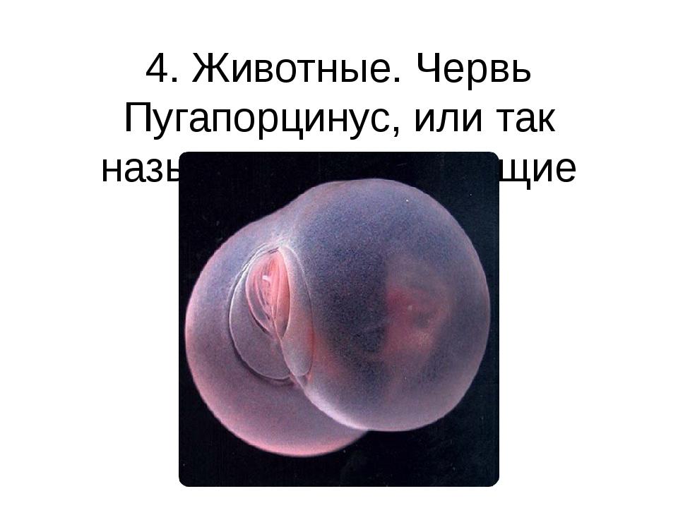 4. Животные. Червь Пугапорцинус, или так называемые «летающие ягодицы» Глубок...