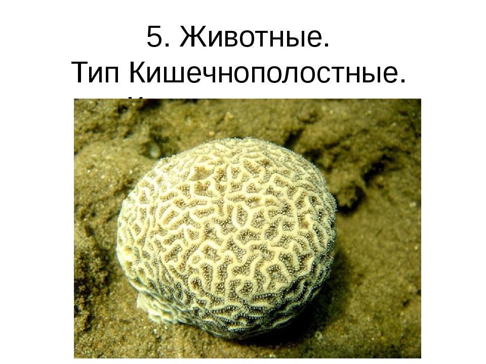 5. Животные. Тип Кишечнополостные. Коралл-мозговик