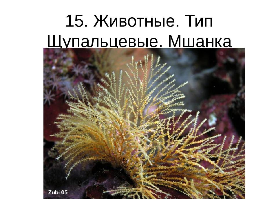 15. Животные. Тип Щупальцевые. Мшанка