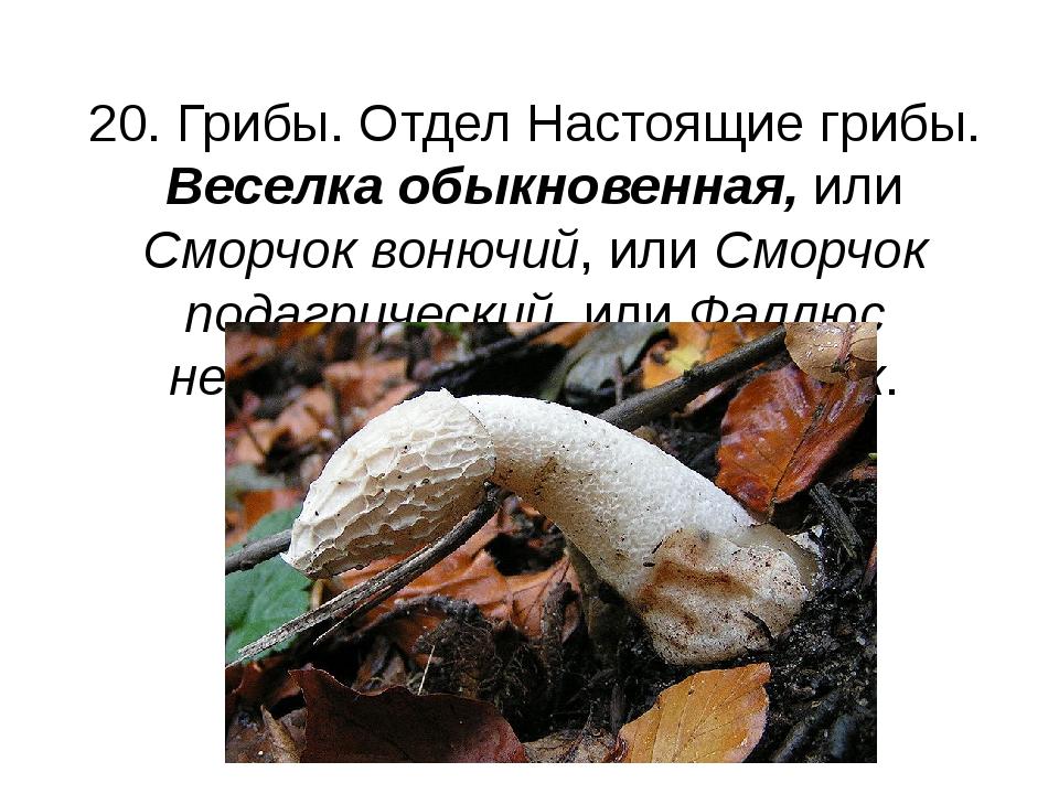 20. Грибы. Отдел Настоящие грибы. Веселка обыкновенная, или Сморчок вонючий,...