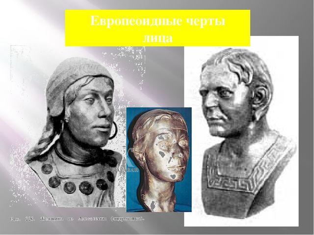 Европеоидные черты лица