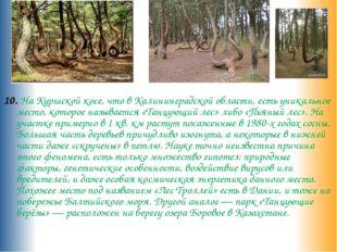 10. На Куршской косе, что в Калининградской области, есть уникальное место,