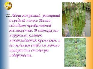 11. Хвощ зимующий, растущий в средней полосе России, обладает чрезвычайной ж