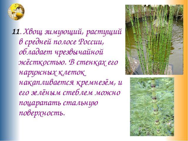 11. Хвощ зимующий, растущий в средней полосе России, обладает чрезвычайной ж...