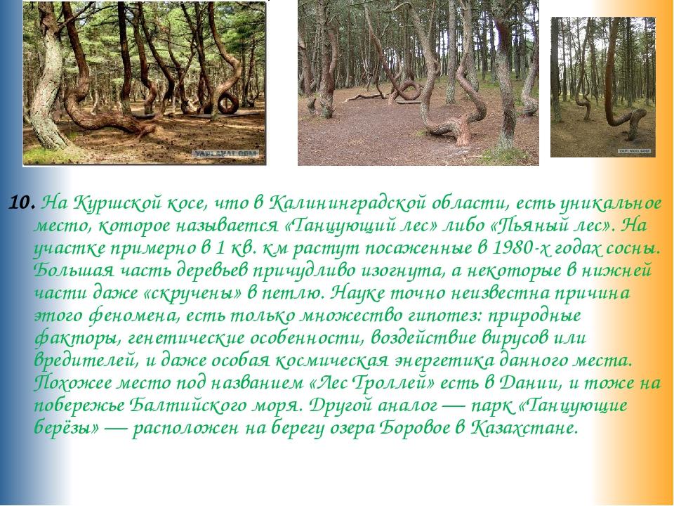 10. На Куршской косе, что в Калининградской области, есть уникальное место,...