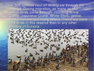 Over 300 species nest on or migrate through the reserve. During migration, as