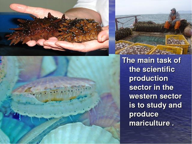 The main task of the scientific production sector in the western sector is to...